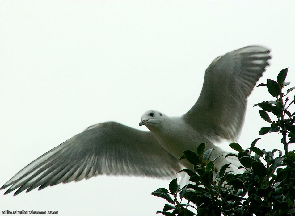 photoblog image Holly Gull