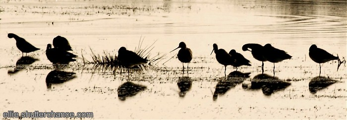 Redshanks?