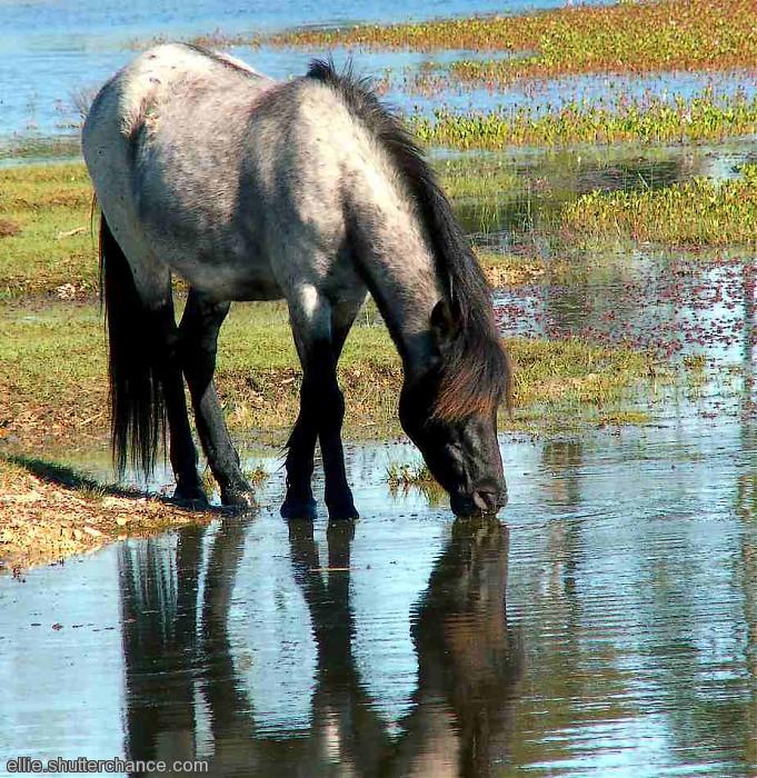 photoblog image Taking a drink