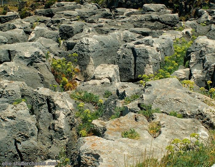 photoblog image Nature's Rockery