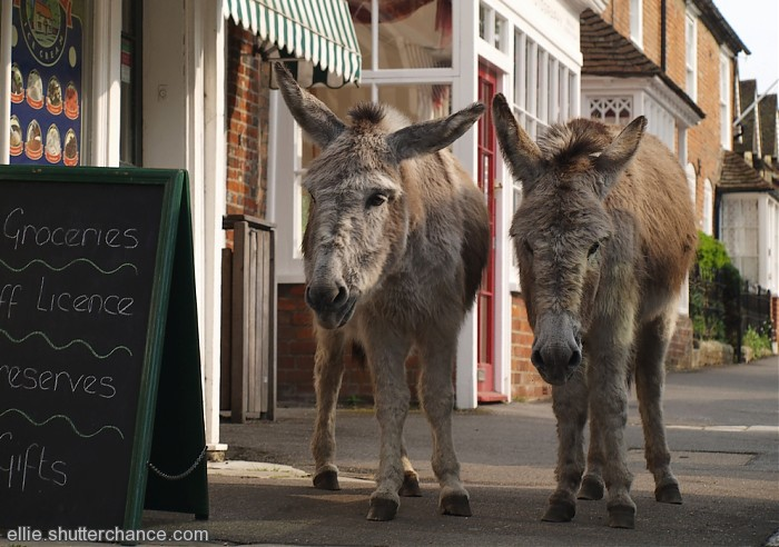 photoblog image Donkeys at Beaulieu