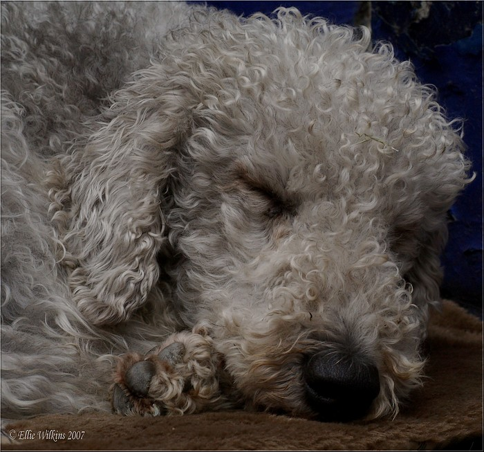 photoblog image Let sleeping dogs lie ...