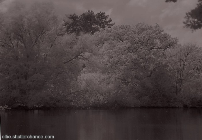 photoblog image infra red