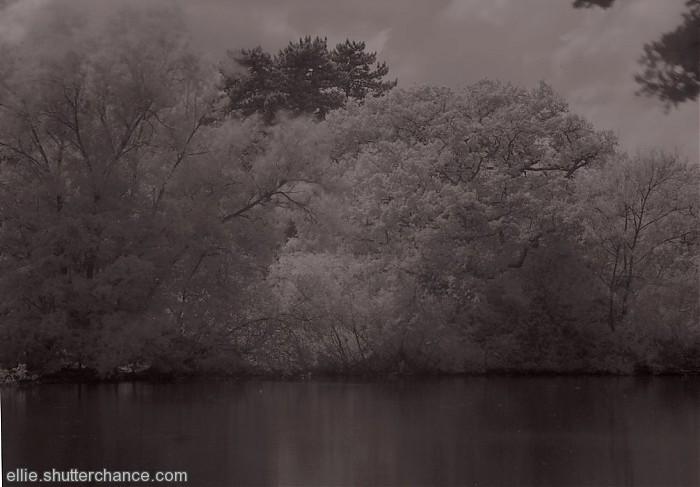 photoblog image infra red